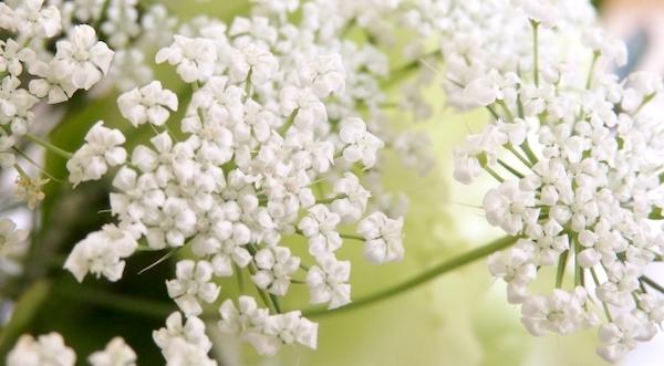 感謝 花言葉 ホワイトレースフラワー