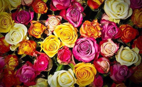 バラ 花言葉