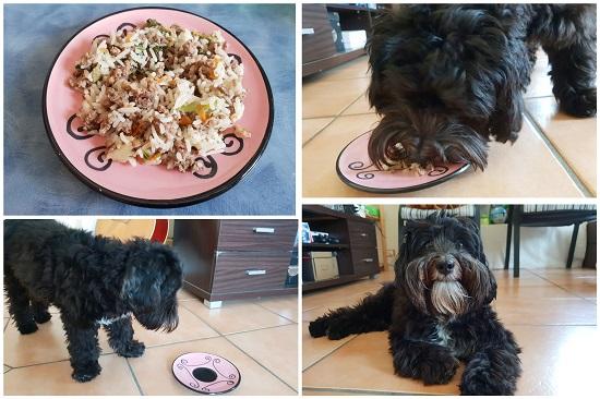 犬 ご飯 手作り レシピ