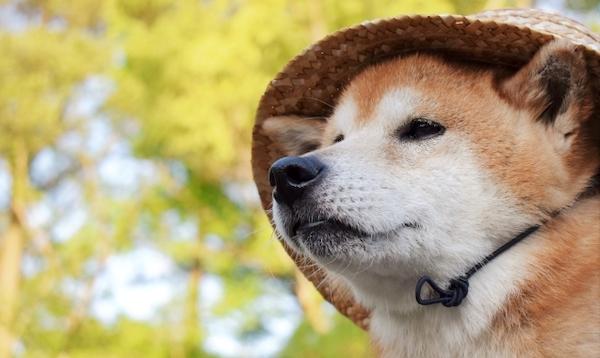 犬 暑さ対策