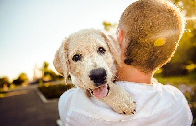 犬 プレゼント