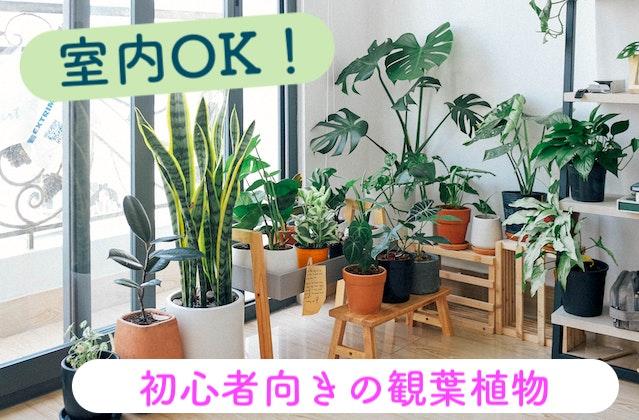 観葉植物 室内