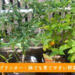 家庭菜園 プランター 野菜