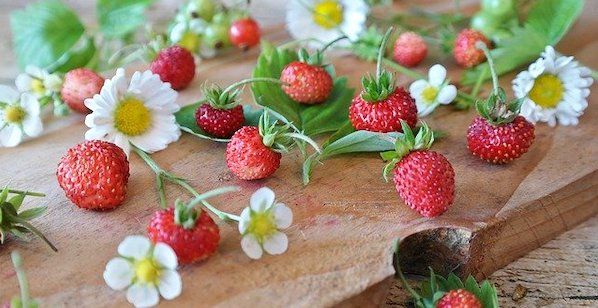 花言葉 幸せ ワイルドストロベリー