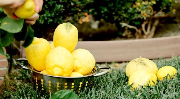 レモンピール 作り方